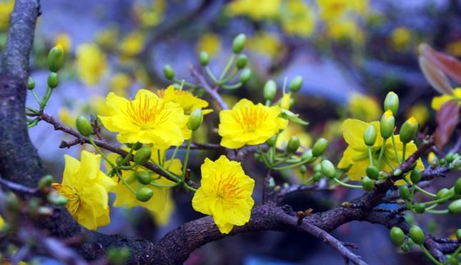 Điểm danh những loại hoa 'hút tài lộc' ngày Tết - ảnh 2