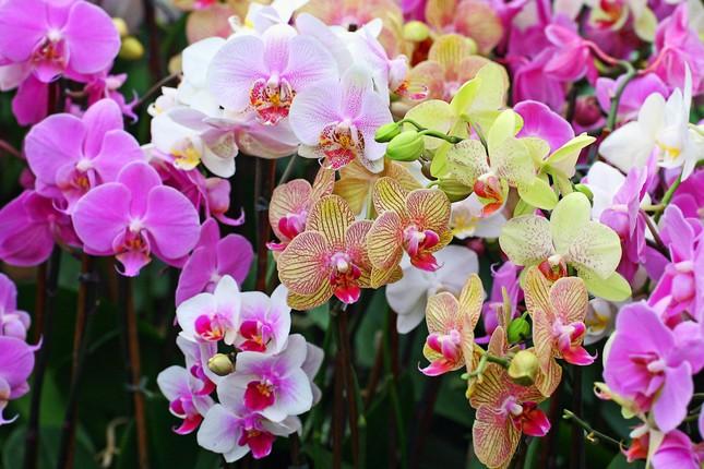 Điểm danh những loại hoa 'hút tài lộc' ngày Tết - ảnh 5