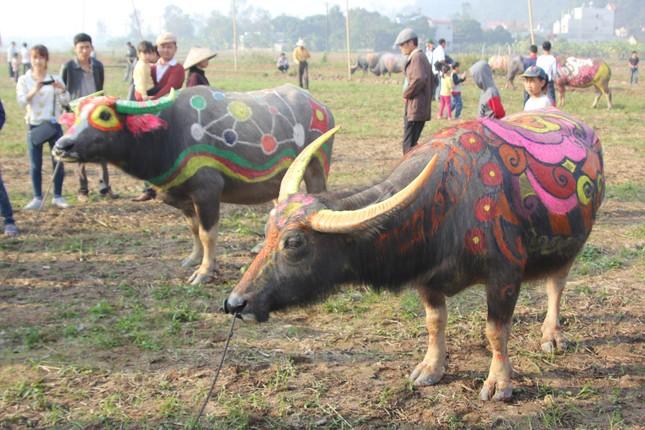 Hà Nam: Nô nức xem 'vua' cày ruộng đầu năm - ảnh 4