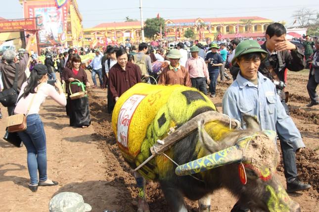 Hà Nam: Nô nức xem 'vua' cày ruộng đầu năm - ảnh 8