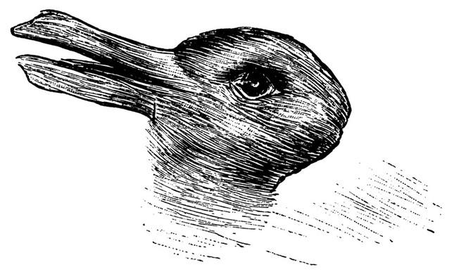 Đây là con vịt hay con thỏ? - ảnh 1