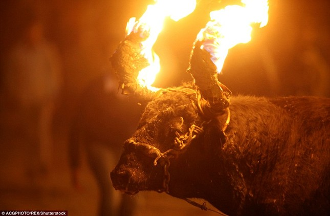 Sửng sốt với lễ hội đốt sừng bò ở Ecuador - ảnh 1
