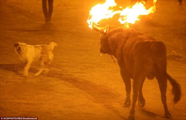 Sửng sốt với lễ hội đốt sừng bò ở Ecuador - ảnh 2