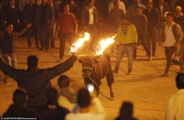 Sửng sốt với lễ hội đốt sừng bò ở Ecuador - ảnh 5