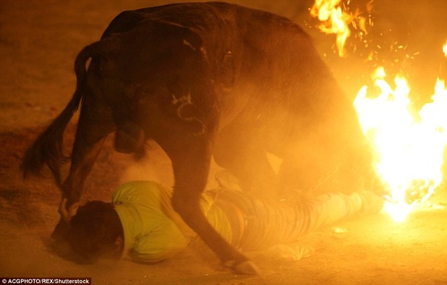 Sửng sốt với lễ hội đốt sừng bò ở Ecuador - ảnh 4