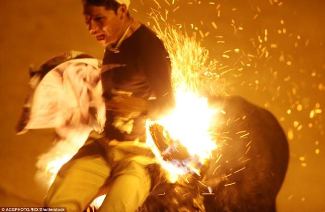 Sửng sốt với lễ hội đốt sừng bò ở Ecuador - ảnh 3