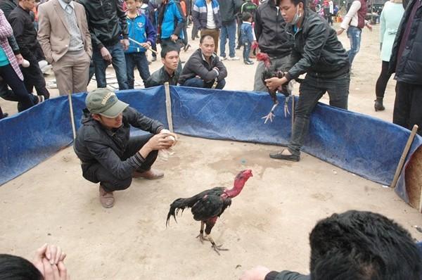 Biến tướng cờ bạc chọi gà, ăn tiền ở Hội Lim - ảnh 4