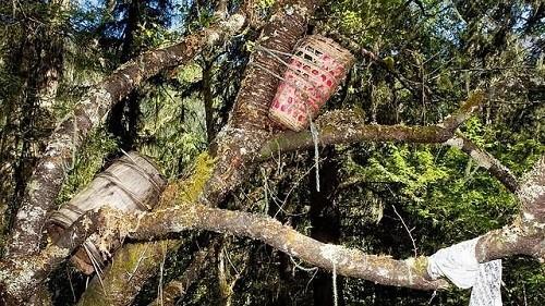 Mục đích ít ai biết của tục thụ táng trên cây - ảnh 2