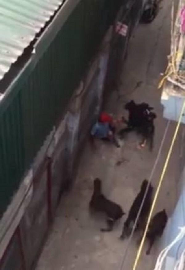 4 con chó dữ tấn công chủ: Bị cắn vẫn phải chịu xử phạt - ảnh 1