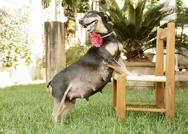 Bộ ảnh nàng chó mang bầu Hot nhất mạng xã hội - ảnh 4
