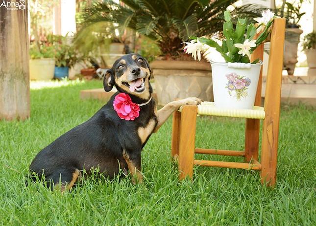 Bộ ảnh nàng chó mang bầu Hot nhất mạng xã hội - ảnh 5