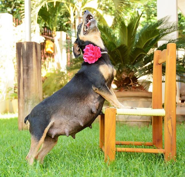 Bộ ảnh nàng chó mang bầu Hot nhất mạng xã hội - ảnh 7