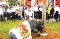 Nghệ An: Trâu tế vẫn bị chém tại Lễ hội Đền Chín Gian - ảnh 1