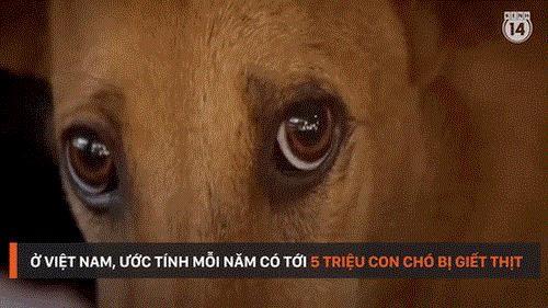 Đôi mắt tuyệt vọng đầy ám ảnh của chú chó sắp lên...bàn nhậu - ảnh 2