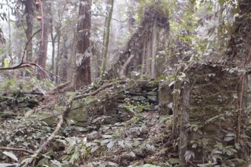 Phế tích biệt thự cũ thời Pháp ở Vườn Quốc gia Ba Vì - ảnh 8