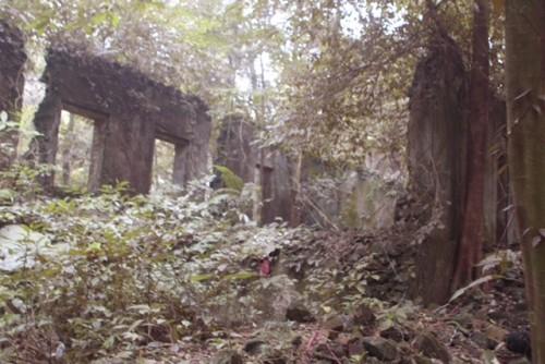 Phế tích biệt thự cũ thời Pháp ở Vườn Quốc gia Ba Vì - ảnh 5