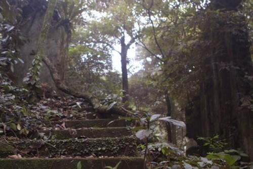 Phế tích biệt thự cũ thời Pháp ở Vườn Quốc gia Ba Vì - ảnh 9