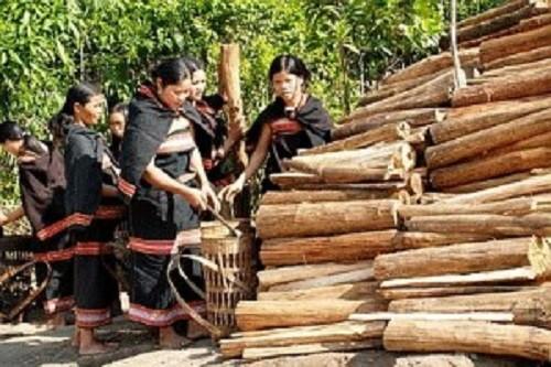 Độc đáo tục chặt củi 'bắt chồng' của người Jẻ - Triêng ở Kon Tum - ảnh 1