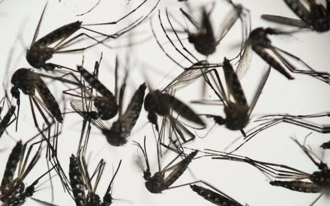 Virus Zika gây rối loạn thần kinh ở người lớn - ảnh 1