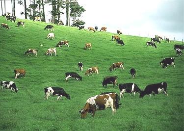 'Đánh tráo' sữa bột - sữa tươi: Người tiêu dùng 'hứng' đủ - ảnh 3
