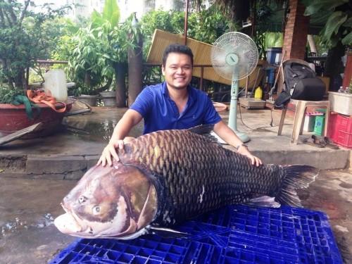 Cá hô khủng giá nửa tỷ đồng khiến đại gia phát 'sốt' ở TP.HCM - ảnh 1