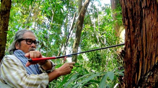 Thăm rừng di sản pơ mu - ảnh 2