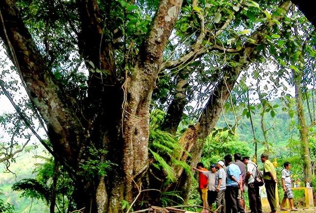 Thăm rừng di sản pơ mu - ảnh 3