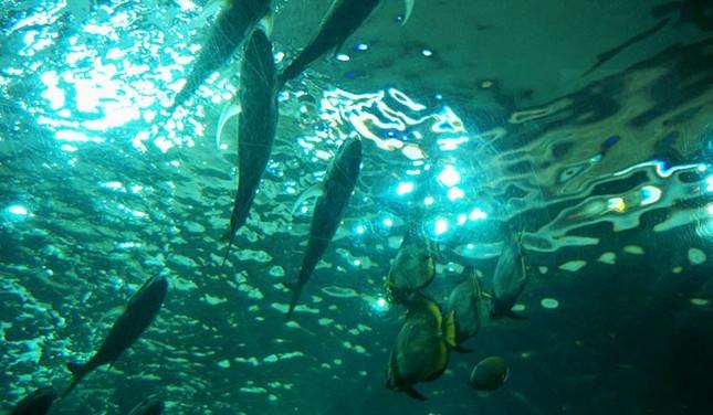 Nguyên nhân cá chết: Những cuộc tranh cãi khô cong - ảnh 1