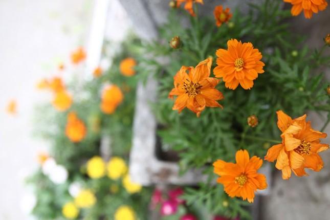 Chàng sinh viên biến bãi rác thành vườn hoa đẹp lung linh - ảnh 5