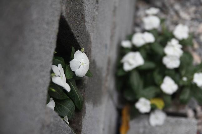 Chàng sinh viên biến bãi rác thành vườn hoa đẹp lung linh - ảnh 4