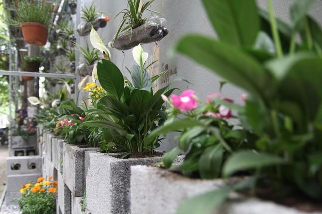 Chàng sinh viên biến bãi rác thành vườn hoa đẹp lung linh - ảnh 6