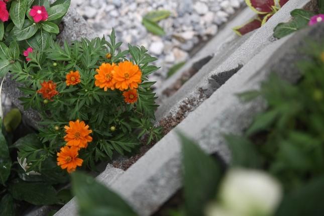 Chàng sinh viên biến bãi rác thành vườn hoa đẹp lung linh - ảnh 8