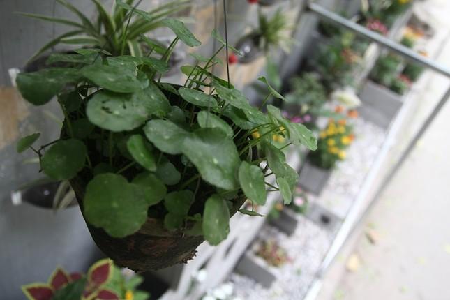 Chàng sinh viên biến bãi rác thành vườn hoa đẹp lung linh - ảnh 9