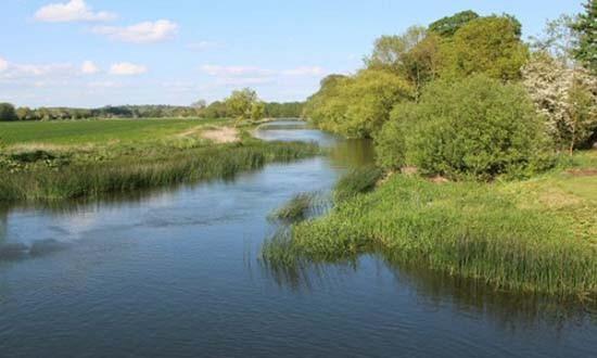 Cá ma cà rồng hút máu tràn ngập nhiều sông ngòi nước Anh - ảnh 2