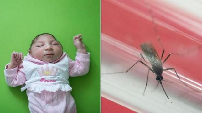 Brazil công bố bằng chứng Zika lây truyền qua muỗi Aedes aegypti - ảnh 1