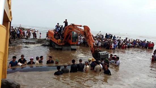 Giải cứu cá voi nặng hơn 10 tấn dạt vào bờ biển Nghệ An - ảnh 2