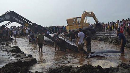 Giải cứu cá voi nặng hơn 10 tấn dạt vào bờ biển Nghệ An - ảnh 4