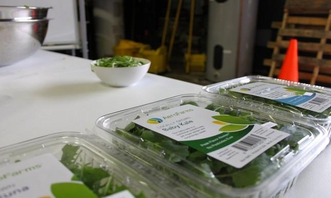 Trang trại thẳng đứng cung cấp 900 tấn rau sạch cho Mỹ mỗi năm - ảnh 13