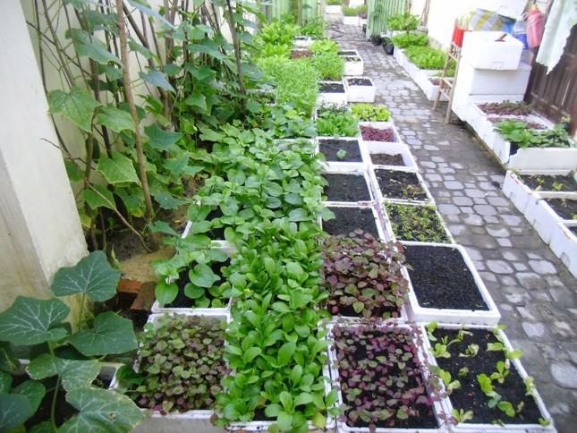 3 bước đơn giản để có vườn rau sạch trên ban công - ảnh 2