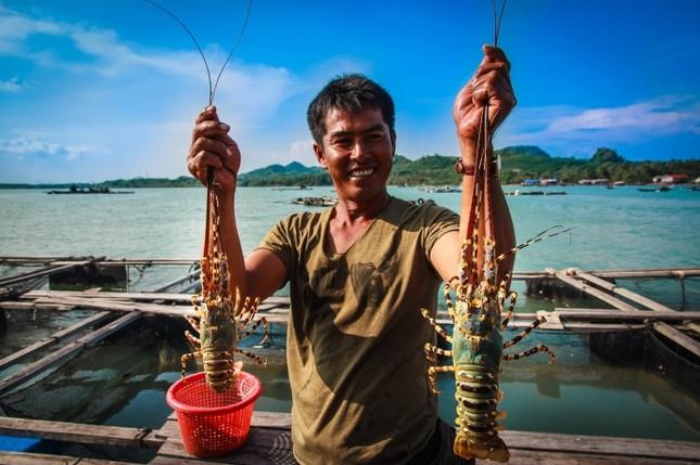 Ghé thăm những hòn đảo này để thưởng thức tôm hùm 'ngon, bổ, rẻ' - ảnh 1