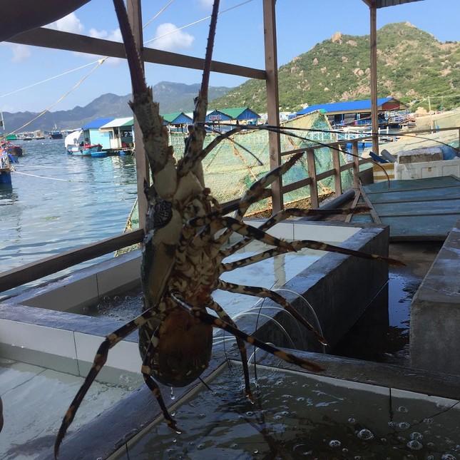 Ghé thăm những hòn đảo này để thưởng thức tôm hùm 'ngon, bổ, rẻ' - ảnh 3
