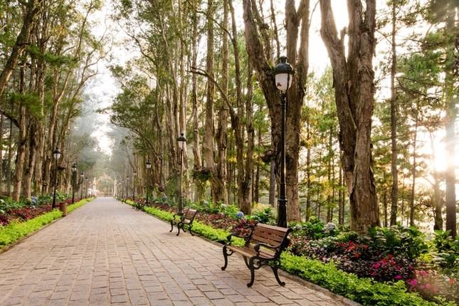 Khuôn viên như vườn thượng uyển trong Dinh Bảo Đại - ảnh 8