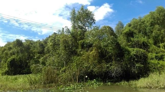 Khám phá rừng tràm bí ẩn tại làng nổi Tân Lập - ảnh 2