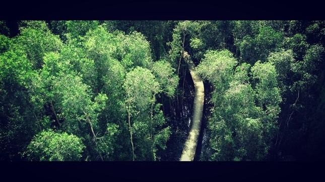 Khám phá rừng tràm bí ẩn tại làng nổi Tân Lập - ảnh 4