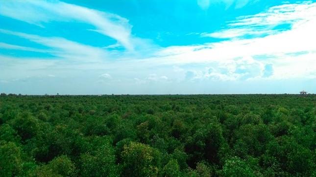 Khám phá rừng tràm bí ẩn tại làng nổi Tân Lập - ảnh 5
