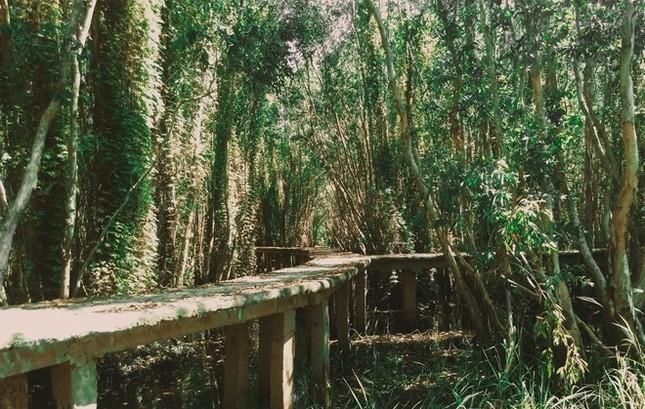 Khám phá rừng tràm bí ẩn tại làng nổi Tân Lập - ảnh 6