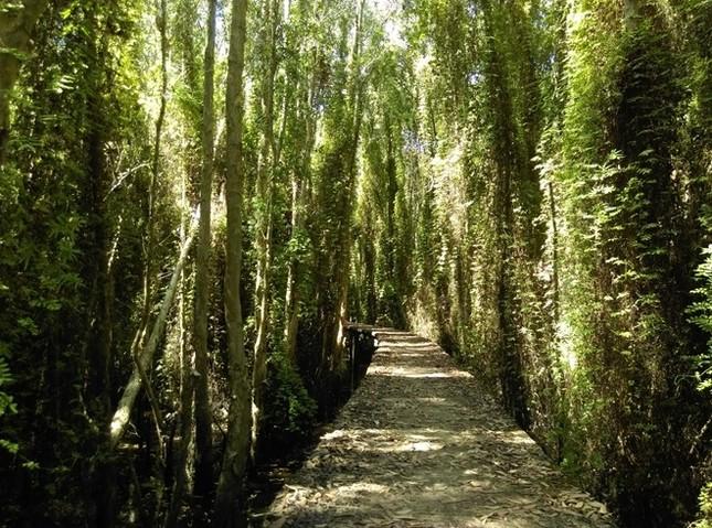 Khám phá rừng tràm bí ẩn tại làng nổi Tân Lập - ảnh 7