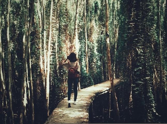 Khám phá rừng tràm bí ẩn tại làng nổi Tân Lập - ảnh 8