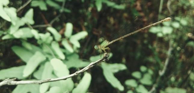 Khám phá rừng tràm bí ẩn tại làng nổi Tân Lập - ảnh 9