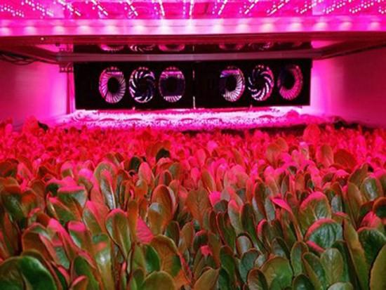Những công nghệ trồng rau sạch kiểu mới - ảnh 3